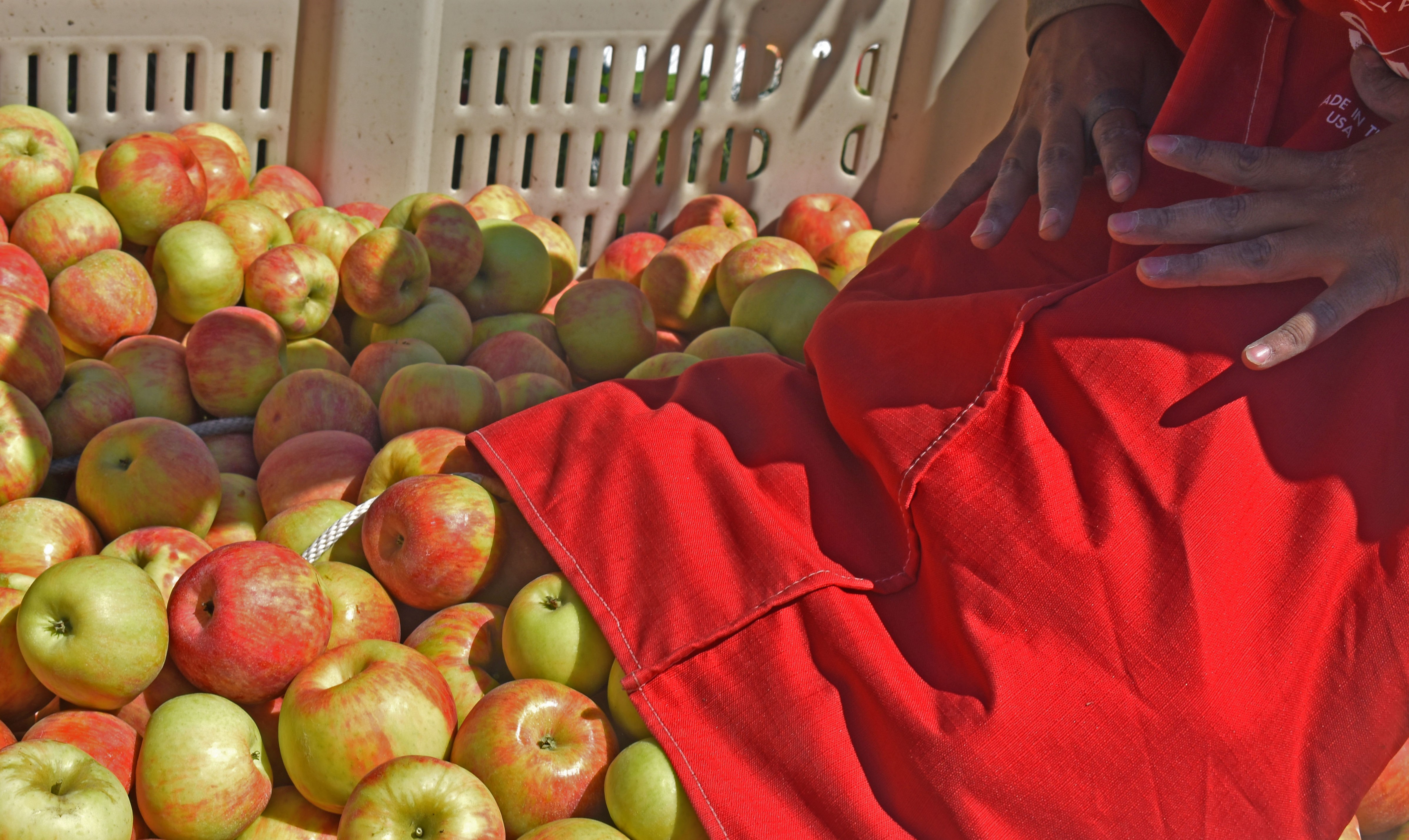 A Quality Fruit Company<br>Committed to Bearing Fruit… Fruit That Will Last.